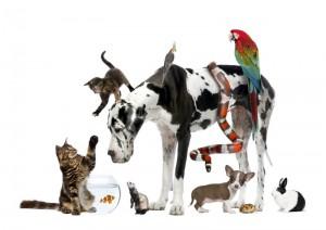 pet-psychology